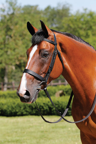 JHL Plain Cavesson Bridle