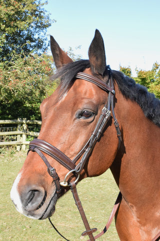 Mark Todd Collection Padded Flash Bridle