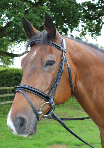 Mark Todd Collection Patent Dressage Bridle