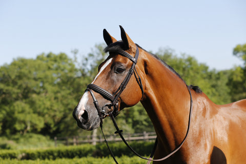 Mark Todd Collection Double Raised Bridle