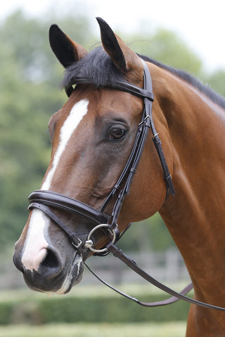 Mark Todd Collection Performance Patent Piped Flash Bridle