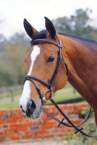 Mark Todd Collection Square Raised Padded Bridle with Flash Noseband