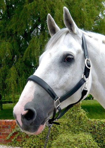 Mark Todd Collection Patent Leather Headcollar (Halter)