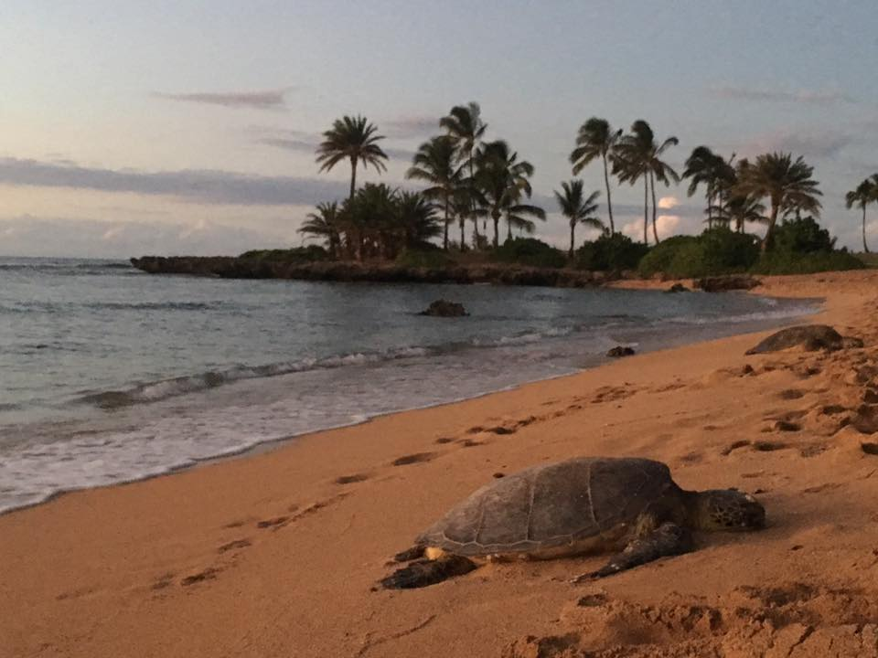 Health Benefits of Walking with Turtles in the Sand