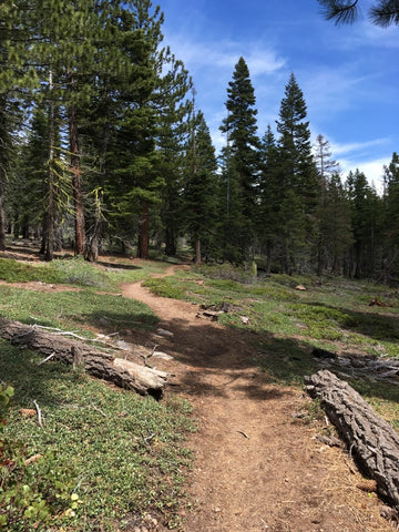 lake-tahoe-backcountry-hiking-trail