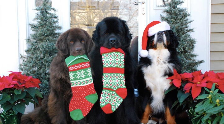 10 Pawsome Holiday Gift Ideas for Your Dog