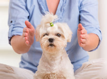 Animal Reiki Sessions
