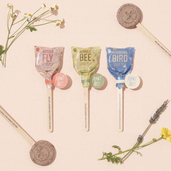 SEED LOLLIPOP 3 PACK - POLLINATOR