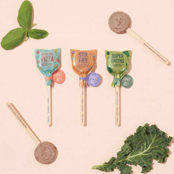 SEED LOLLIPOP 3 PACK - CULINARY