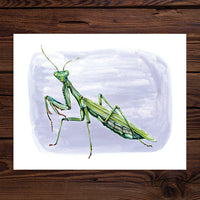ROSALIE HAIZLETT  PRINT - PRAYING MANTIS