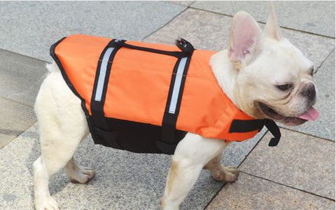 small white dog with orange life jacket