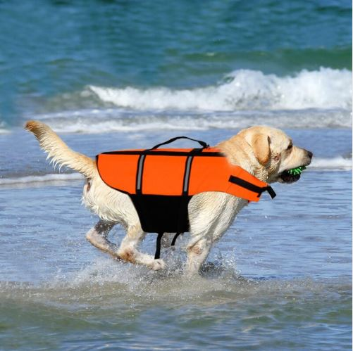 Large white dog running on beach with orange life jacket