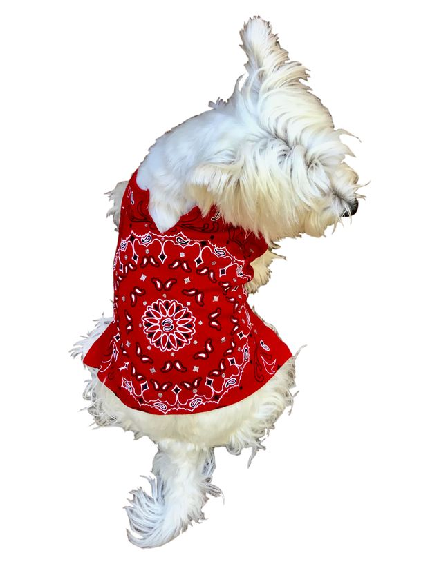 BANDANA TEE (RED) - doggyDAWGworld.com