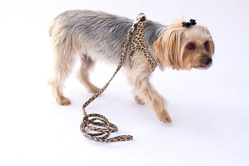 LEASH STEP IN HARNESS  (LEOPARD)