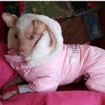 "Load image into Gallery viewer, ""RUFFIN IT"" SNOW SUIT (PINK) - doggyDAWGworld.com"