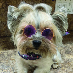 PIZAZZ SUNGLASSES - doggyDAWGworld.com