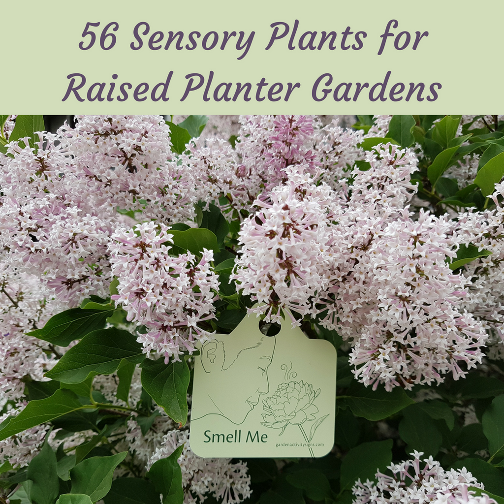 56 Sensory Plants for Raised Planter Gardens