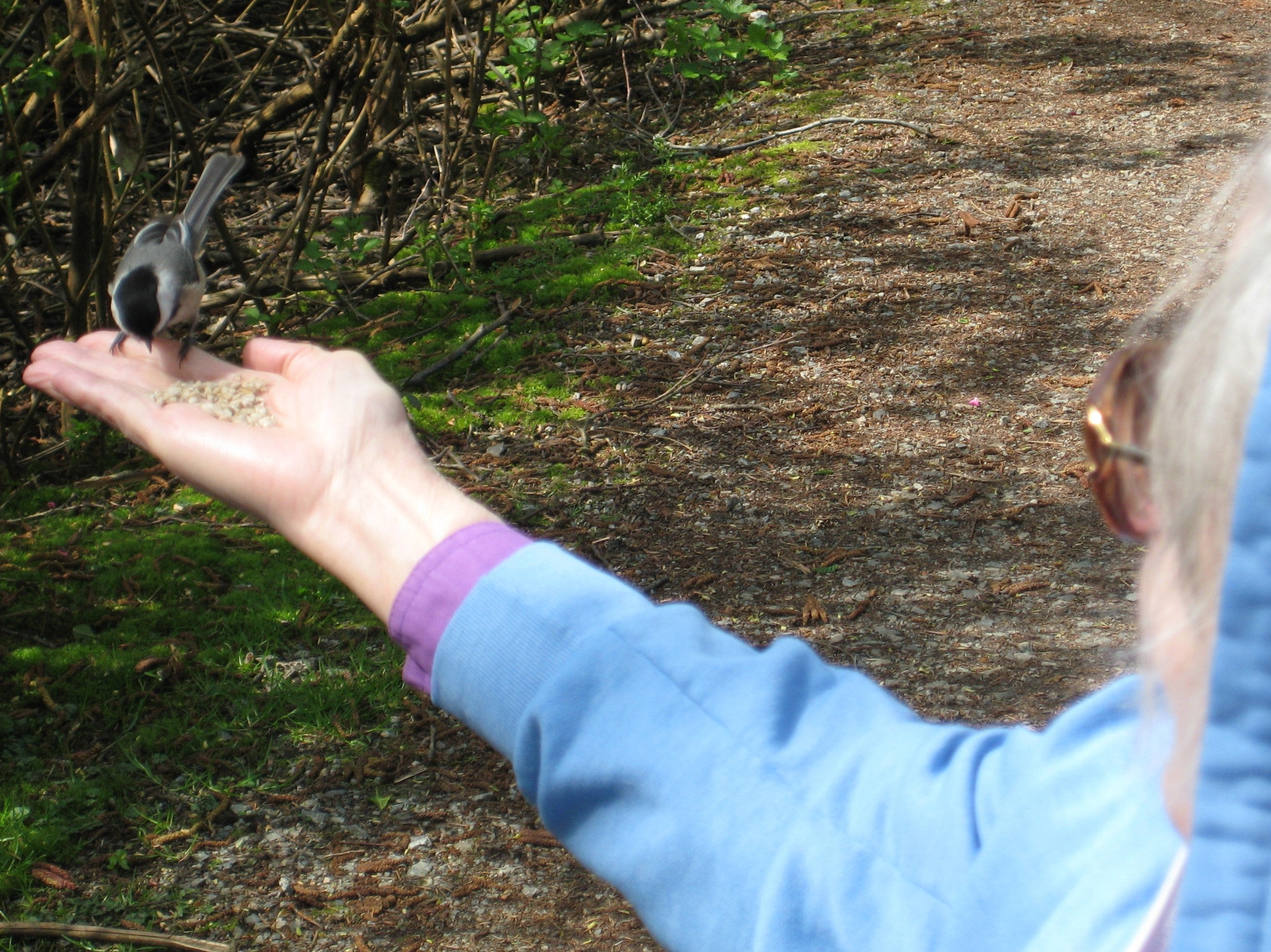 11 Simple Therapeutic Birding Activities You Can Facilitate
