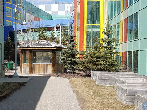 Gardening with Kids at Alberta Children's Hospital - Garden Activity
