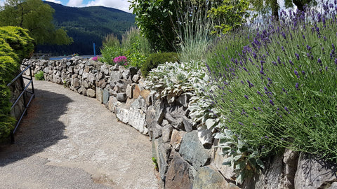 Harrison Hot Springs sensory garden