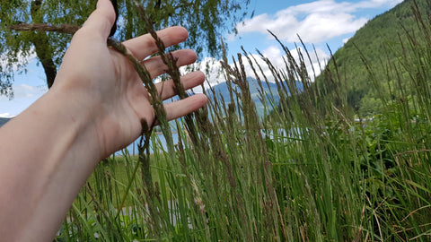 Running fingers through ornamental grass