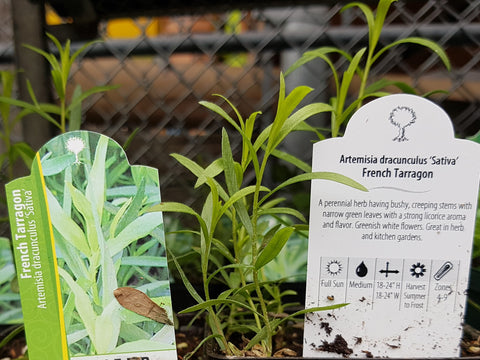 Read plant labels before buying