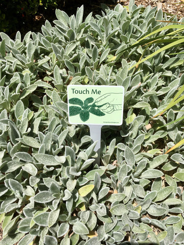 Touch the soft lambs ear leaves - garden activity signs