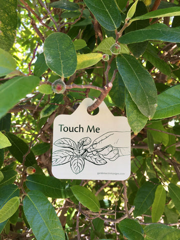 Touch the sandpaper fig leaves - garden activity signs