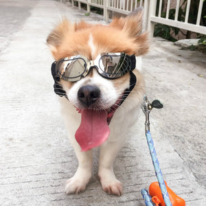 Foldable Pet Glasses
