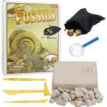Load image into Gallery viewer, Digging up fossils toy Sea life DIY 05