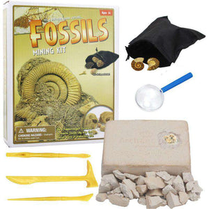 Digging up fossils toy Sea life DIY 05