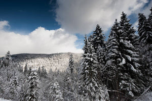 Black Forest Christmas - here is what's happening during the winter