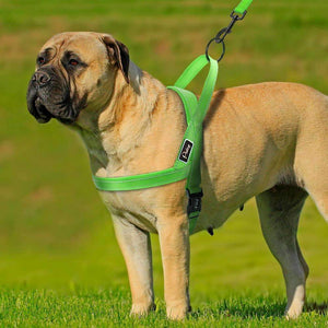 Harness For Small & Large Dogs