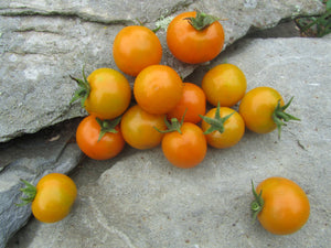 1LOVE - Seed package - California Sunshine Tomato Seeds 308 • 10 seeds