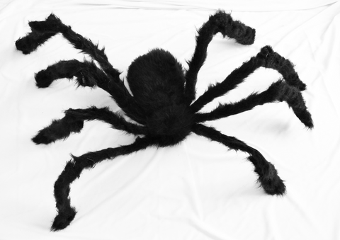 Large Furry Spider