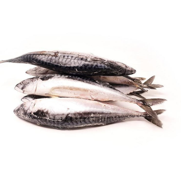 Mackerel Titus - 4 Pieces