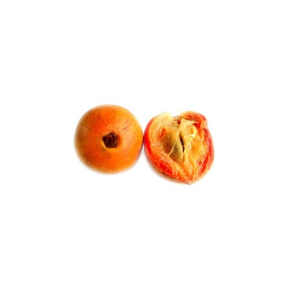 Agbalumo/ African Star Apple/ Udara/ Alansa (Pack of 2)