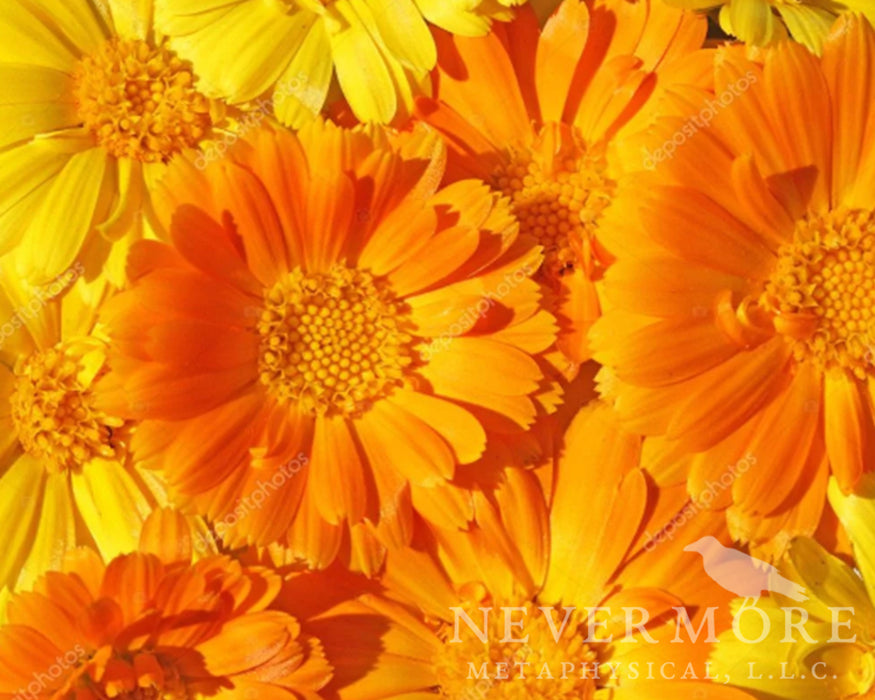 Calendula Flowers - The Nevermore Coven