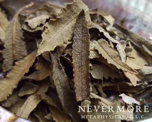 Yerba Santa Dried Herbs - The Nevermore Coven