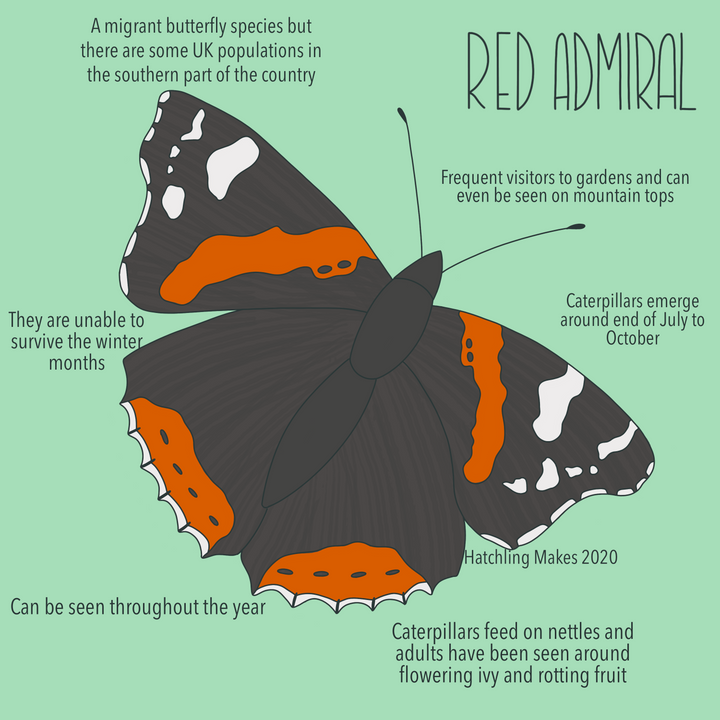 52 Species : Red Admiral Butterfly