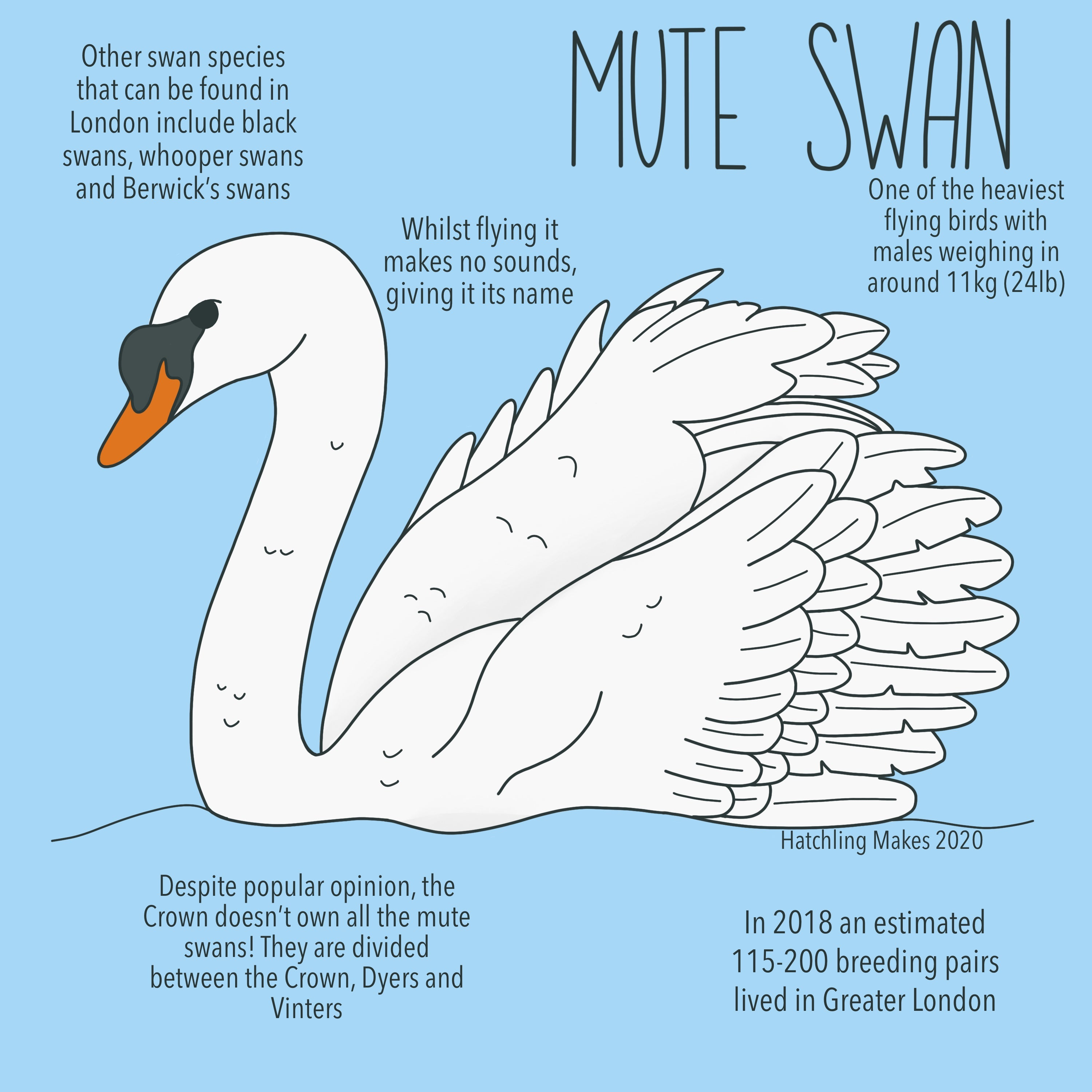 hpim5698 round white swan in the water coloring Pages - Printable ... | 3000x3000