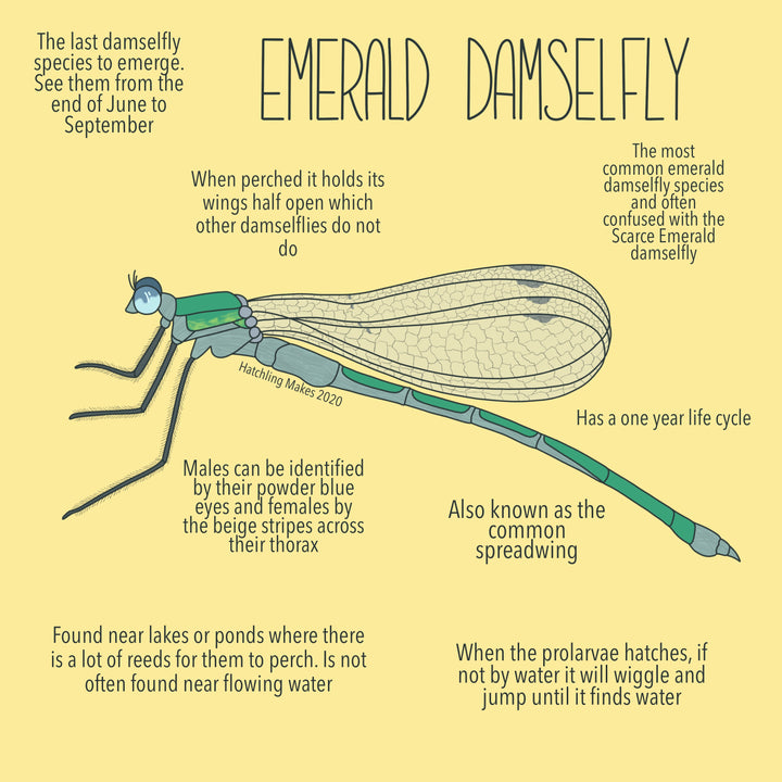 52 Species : Emerald Damselfly