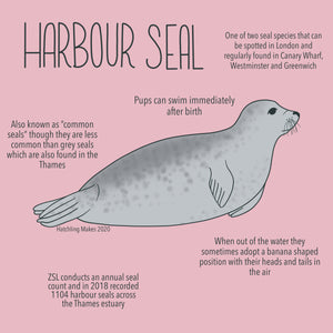 52 Species: Harbour Seal