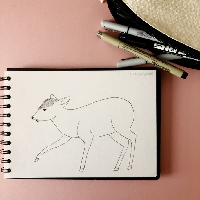 Inktober Day 6: Tufted deer