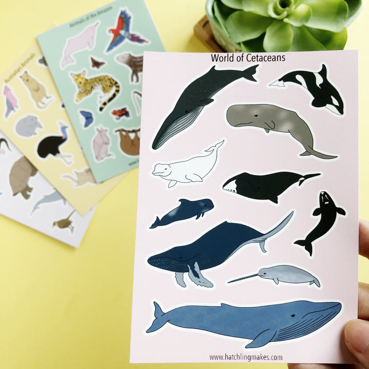 New Product : Cetacean Sticker Sheet