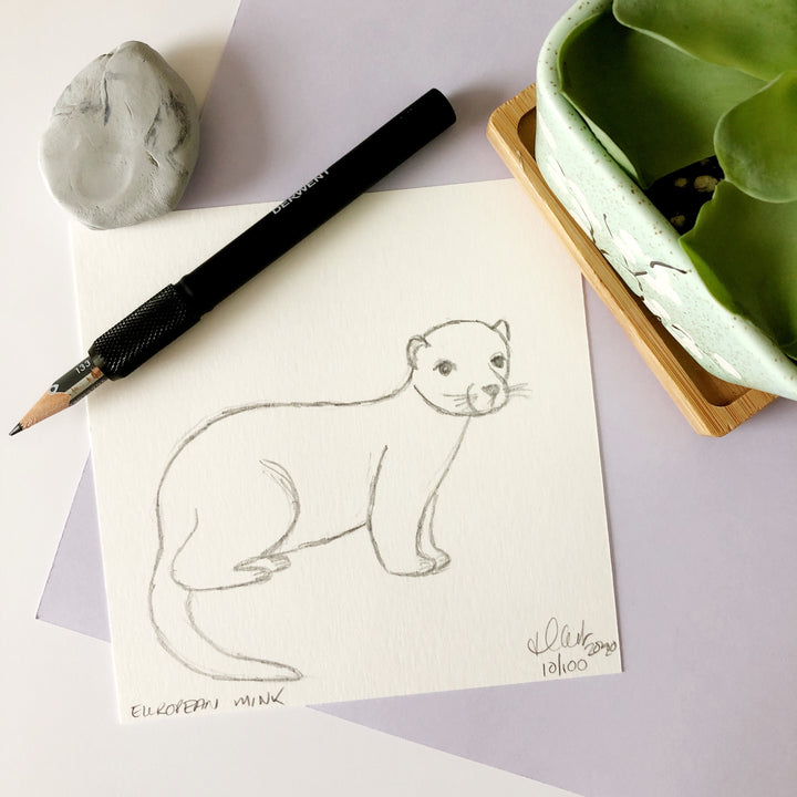 100 Day Project: European Mink