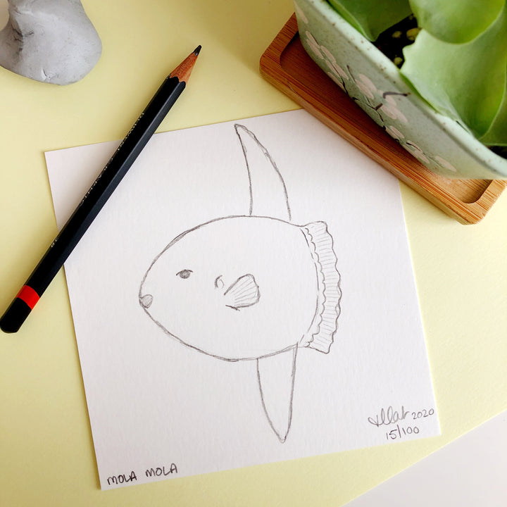 100 Day Project: Ocean Sunfish/Mola