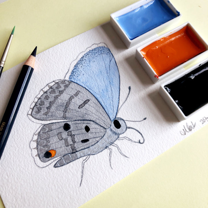 Love Butterfly Challenge : Miami Blue