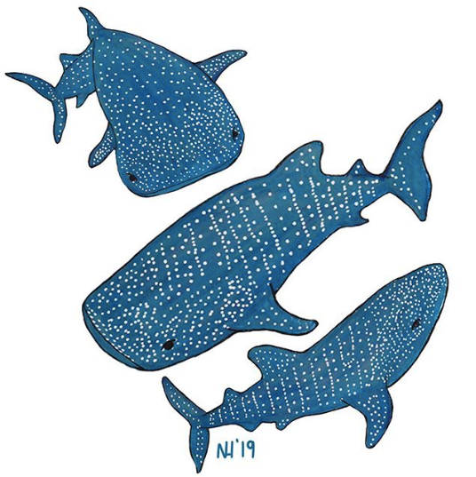 A group of whale sharks