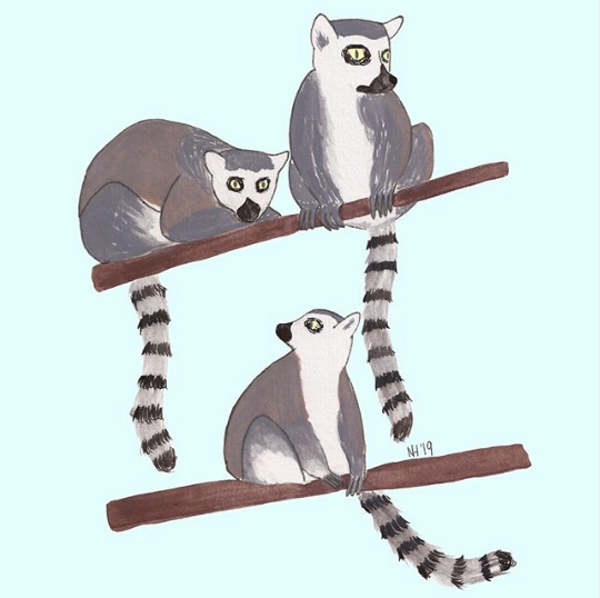 A conspiracy of lemurs